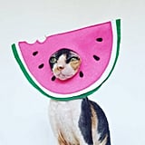 Watermelon Cat Hat Costume