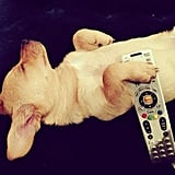 Lauren Conrad captured a photo of her sleeping pup. Source: Instagram user laurenconrad