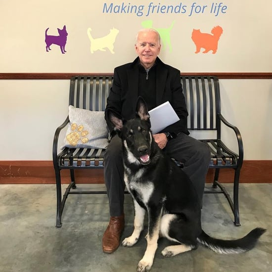 Joe Biden Adopts Rescue Dog Named Major
