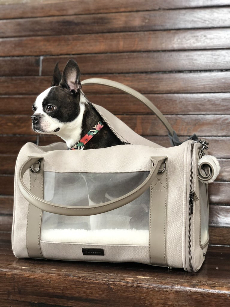 My First Impression of the Maxbone Global Citizen Pet Carrier Bag