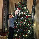 Eva Longoria decorated her Christmas tree alongside her dog, Jinxy. Source: Eva Longoria on WhoSay