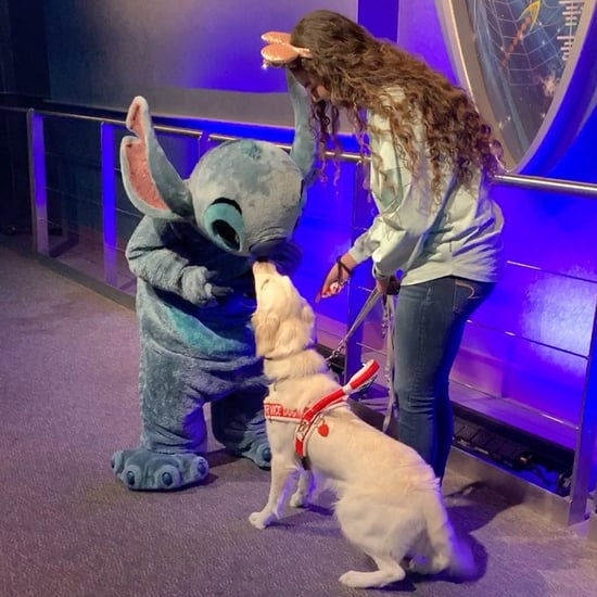 Golden Retriever Meeting Stitch at Disney World | Video