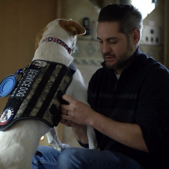 How Service Dogs Can Help Soldiers With PTSD (Video)