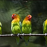 A group of lovebirds at the aviary El Nido.