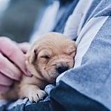 Snuggling a pet.