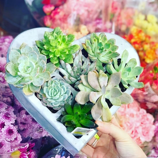 Trader Joe's Now Has Heart-Shaped Succulent Planters