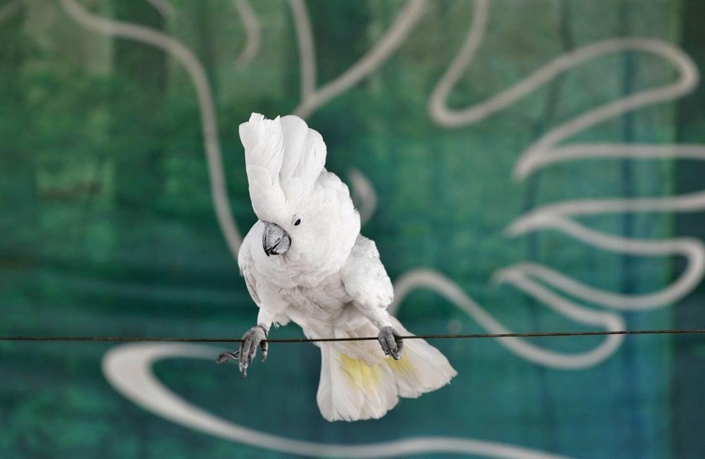 Birds (Not) Behaving Badly