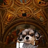 Tinkerbelle the Dog in Rome