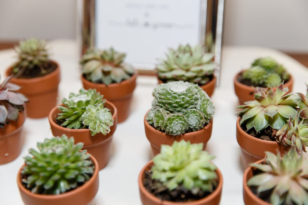Cactus Baby Shower Ideas Popsugar Family