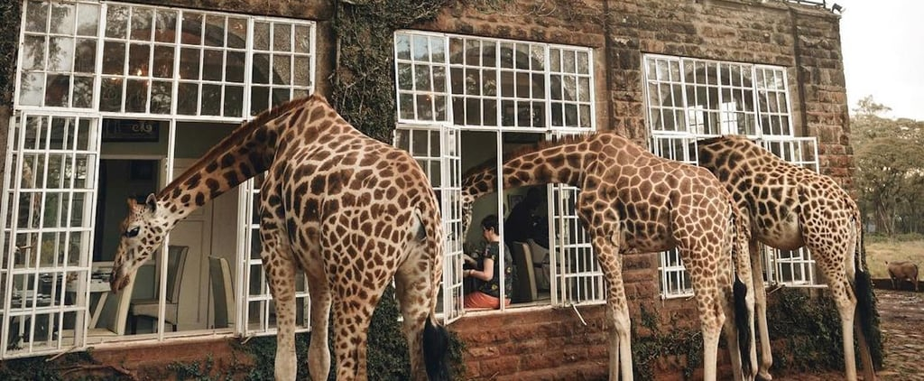 So Wild! Get Up Close and Personal With Giraffes at This Incredible Hotel in Kenya