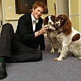 Harry pet his house masters' spaniels, Rosie and Jenny, at Eton College in 2003.