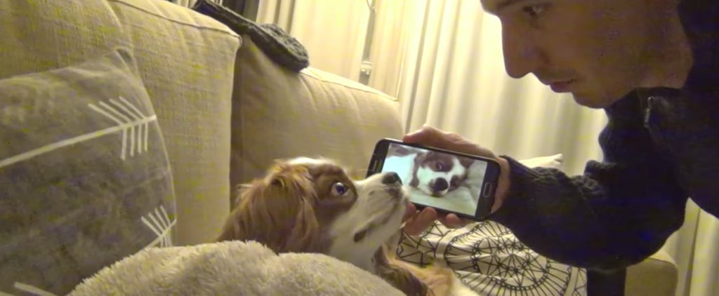 This Comedian Got His Dog to Stop Snoring in the Most Hilarious Way Possible