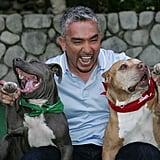 Cesar Millan Filming the 100th episode of the 'Dog Whisperer'