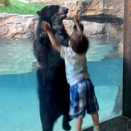 Bear Jumps With Boy at Nashville Zoo