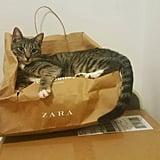 ولا بدّ بأنّك قد بدأتِ بجمع الكثير من أكياس التسوّق الكبيرة والصناديق الفارغة لأنّ مهمّتك الأساسيّة هي إرضاء قطك ليس إلا
