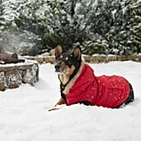Frisco Anchorage Dog and Cat Parka
