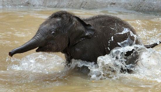 Baby's First Bath!