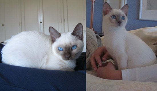 Help DearSugar Name New Kittens!