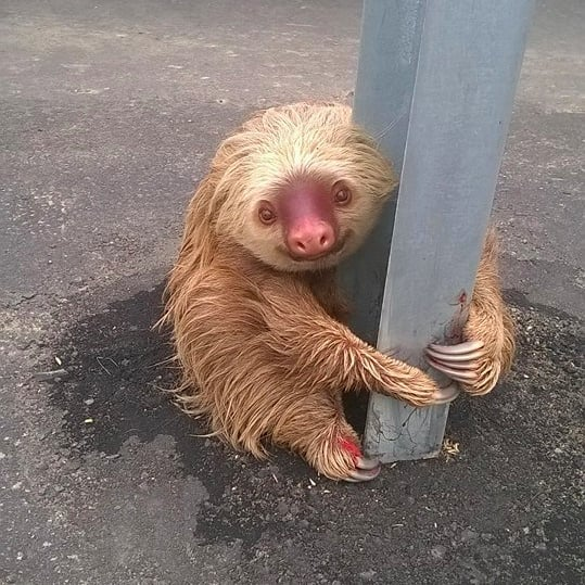 Sloth Rescued by Police