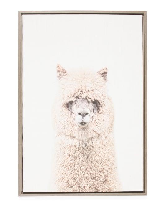 Alpaca Print Framed Canvas Wall Art