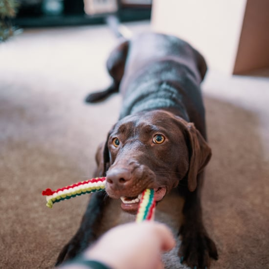 How Often Should I Replace My Pets' Toys?
