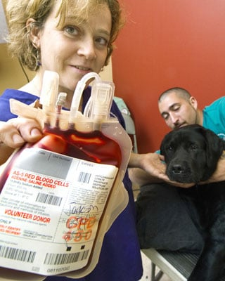 Have Your Dogs Given Blood?