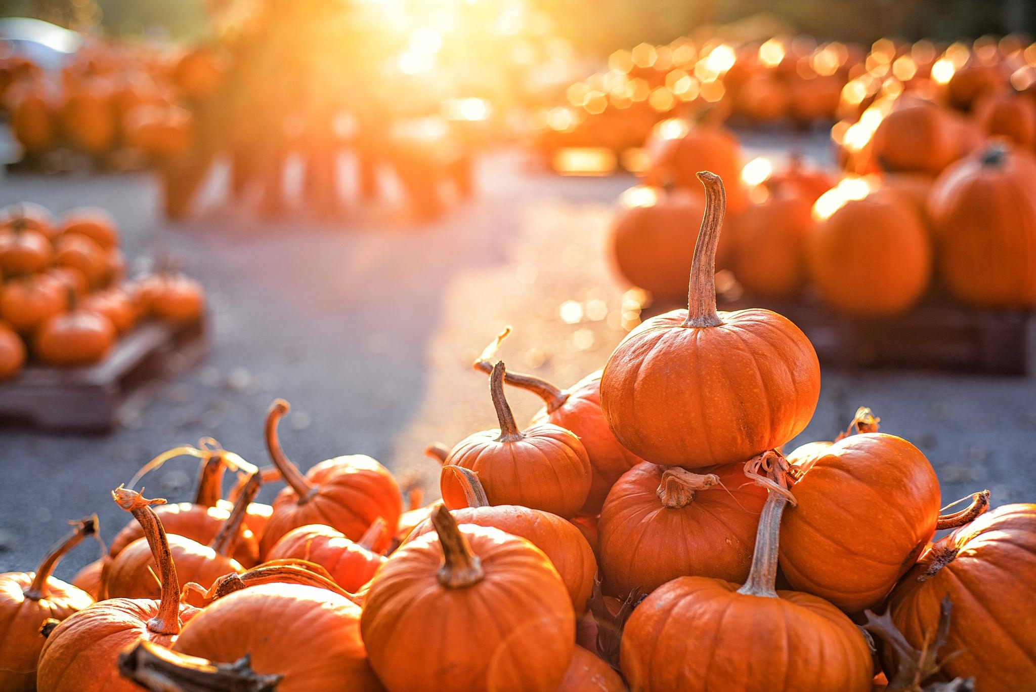 A pile of bright orange pumpkins on a pumpkin patch basking in sunlight