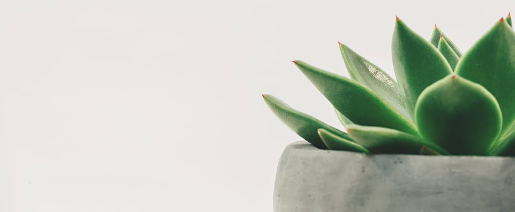 Beauty Benefits of an Aloe Vera Tree