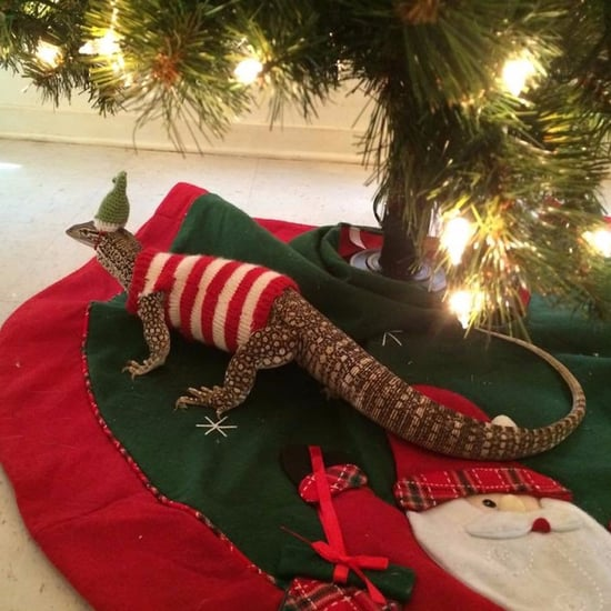 Lizard in Christmas Outfit