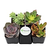 Succulents (Collection of 4) ($19)