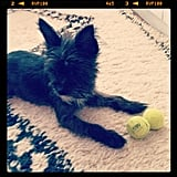 Thakoon couldn't resist taking a picture of his dog, Stevie, and we can see why!  Source: Twitter User ThakoonNY