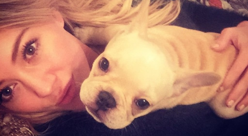 Hilary Duff's French Bulldog Beau Passes Away — Read Her Heartbreaking Message