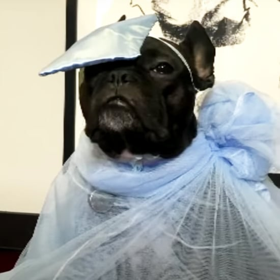 Watch James Corden Host a Pet Gala in Honour of the Met Gala