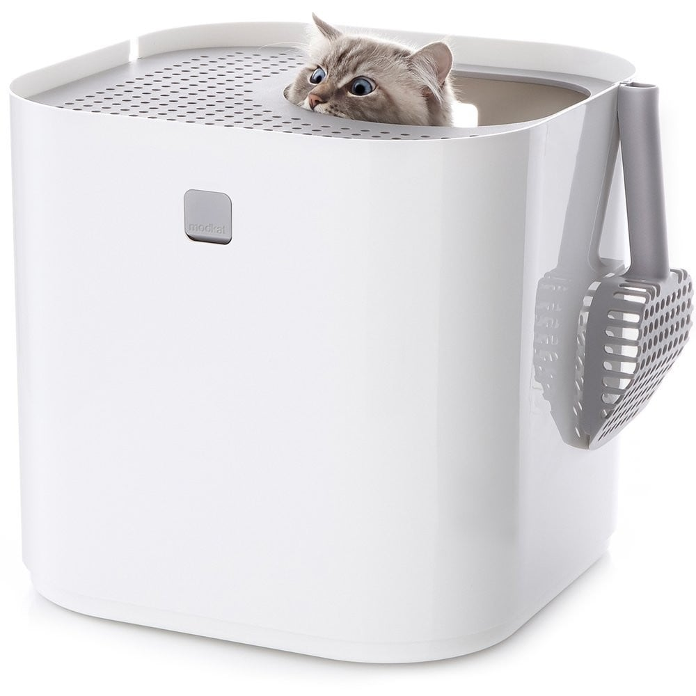 Best Products For Your Cat on Amazon