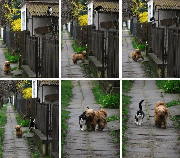 This pooch waits for his cat friend every day in the same spot, just like two kids after school. Source: Imgur user camdenyards