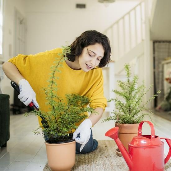 Best Indoor Gardening Gifts