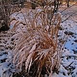 Winter in Kaiseraugst - AG - Switzerland