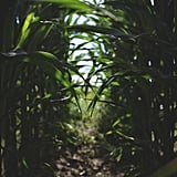 Find your way through a corn maze.