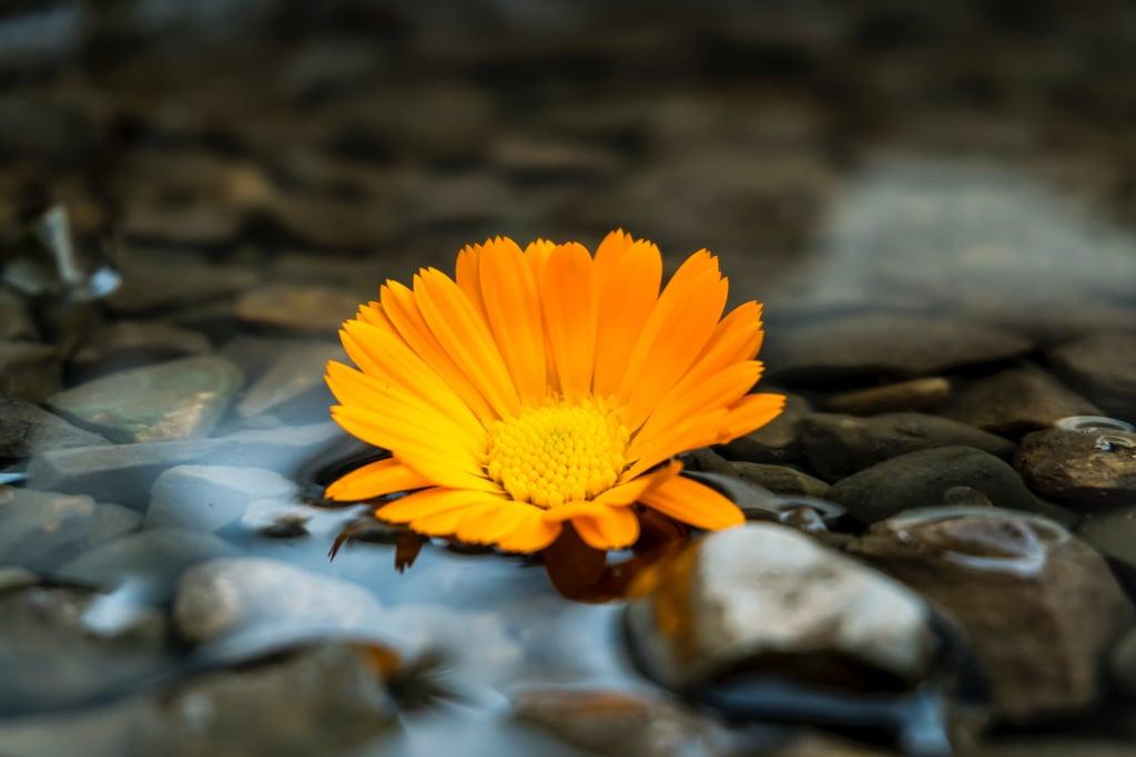 Skip rocks at a pond.