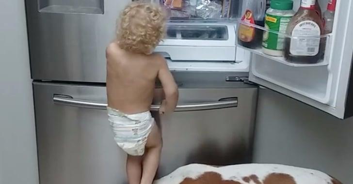 Toddler Using Dog To Open Fridge Video