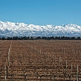 Argentina For Malbec