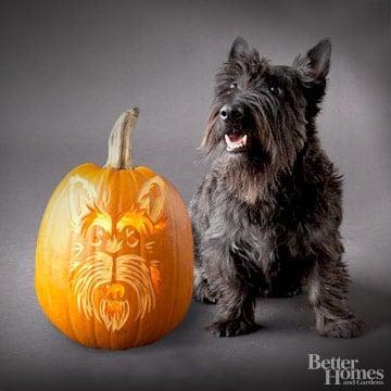 Scottish Terrier Downloadable Dog Breed Pumpkin Stencils