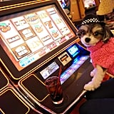 I got my paws on some slot machines.