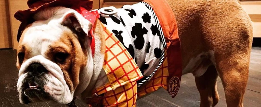 Chrissy Teigen's Dog Dressed as Woody From Toy Story Video