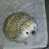 Hedging Bathtime