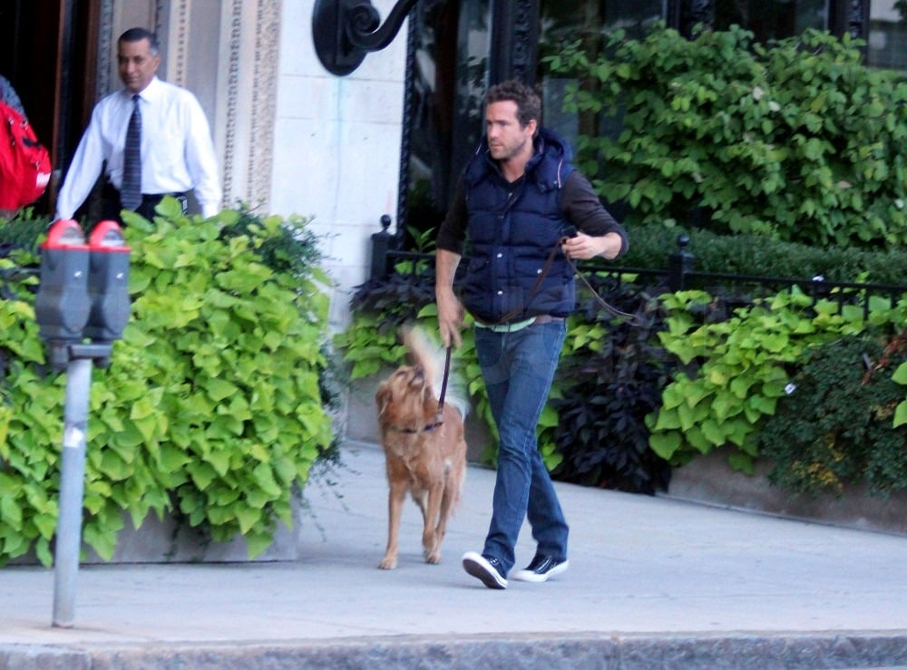 Ryan Reynolds and his adopted pup, Baxter, ventured out of their Boston hotel last night and headed out on a stroll. Baxter accompanied Ryan to Massachusetts where the actor's currently filming R.I.P.D. with Kevin Bacon. They're currently in the middle of production, but next Ryan may take a break from working in front of the camera to lend his voice to two separate animated projects. He's reportedly working on And Then There Was Gordon with his close friend and vacation companion Sandra Bullock in addition to Turbo, the tale of a garden snail who accidentally gains extraordinary speed and sets out to fulfill his life's dream.