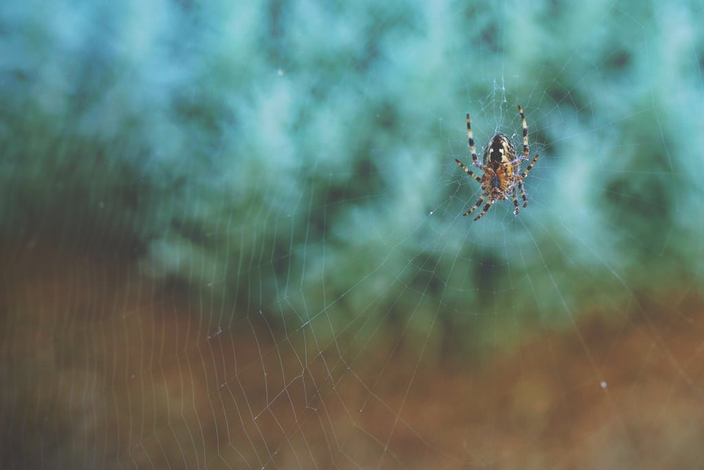 We eat eight spiders a year during our sleep.