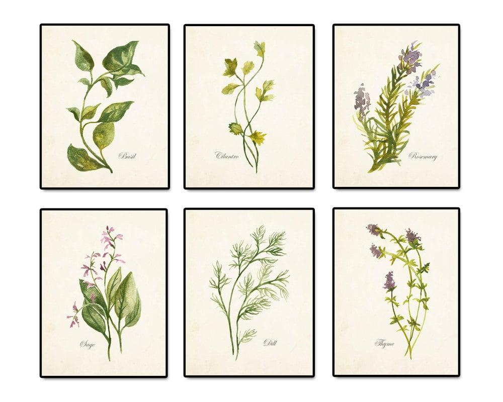 Watercolor Herbs Print Set No. 2 Botanical Print Giclee Art
