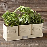 Herb Pot With Tray