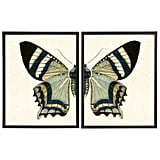 Split White and Blue Butterfly Prints in Copper and Black Shadowboxes